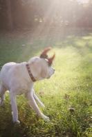 raising a super dog