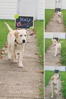 raising a super dog www.donnasword.com
