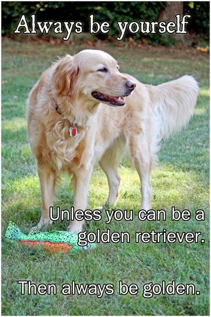www.godobedog.com