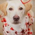 Holly CCI puppy