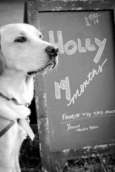 Holly CCI puppy
