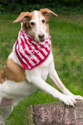 Jager is an All-American Kibble Hound.