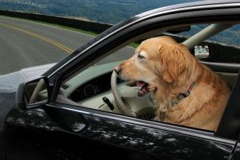 Micron driving