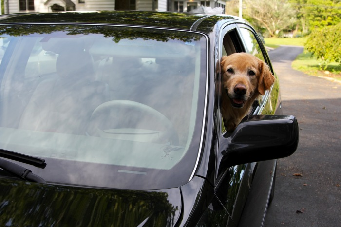 Micron in car