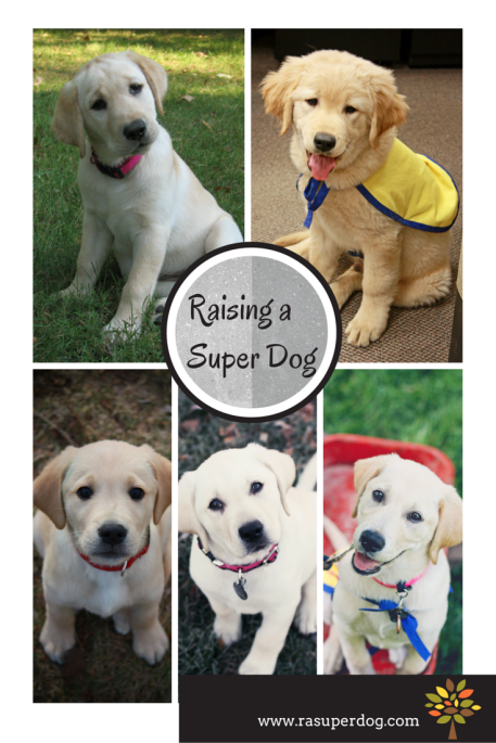 raising a super dog