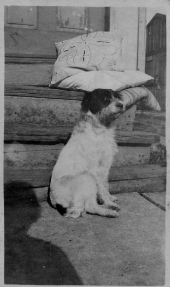 Portrait Dog 1917